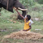 Boy from tribal village feeding elephant